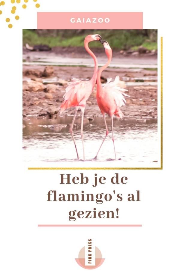 De flamingos in de GaiaZoo